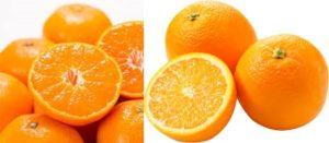 みかんとオレンジは別物